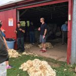 Upperbrook Farm: Open Farm Day 2016